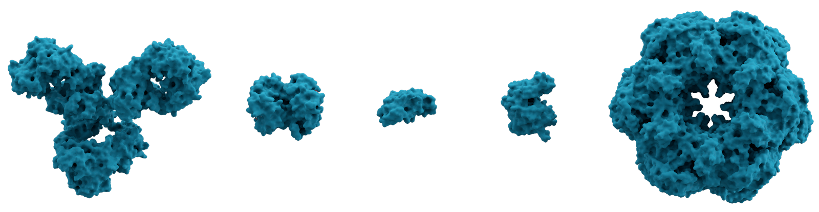 A number of proteins represented in 3D. From left to right are: immunoglobulin G (IgG, an antibody), hemoglobin, insulin (a hormone), adenylate kinase (an enzyme), and glutamine synthetase (an enzyme)